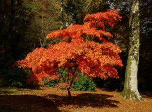 stourhead-autumn-4-1024x756