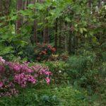 Hale gardens (1 of 46) (1280x853)